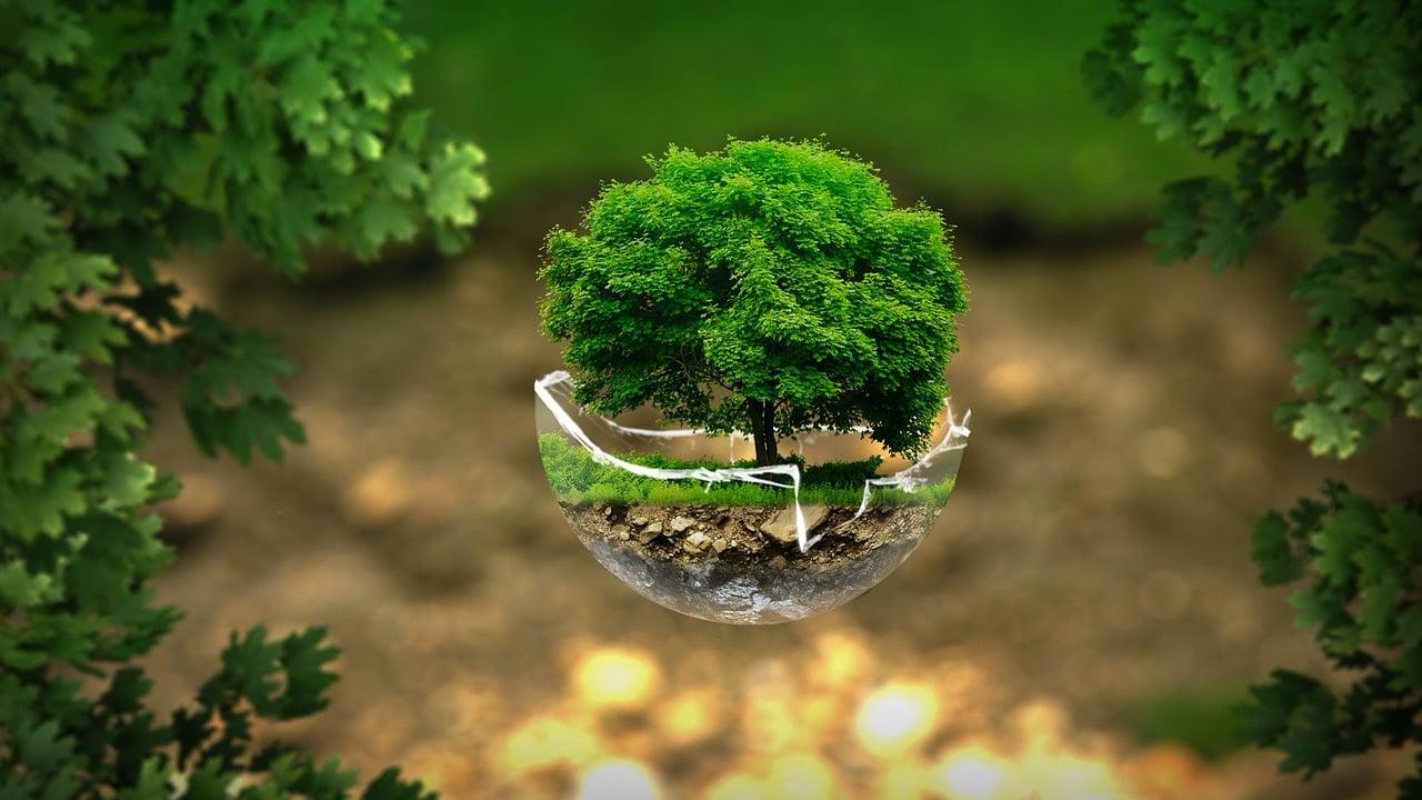 環境保全に関心がある人は婚活を諦めやすい